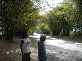 Road2006-02-02_02.jpg