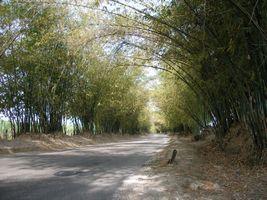 Road2006-02-02_03.jpg