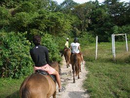 horseBack2006-02-03_02.jpg